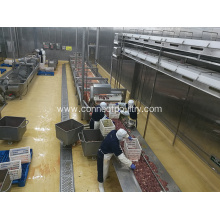 poultry processing line of belt conveyor